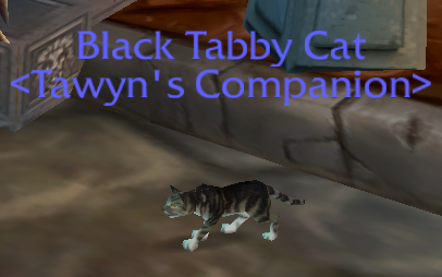 blacktabbycat